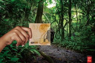Как пожертвовать деньги заповеднику в Каабонге?