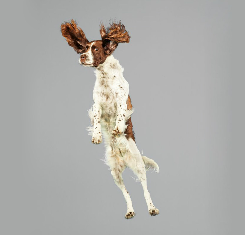 Фото собак разных пород.