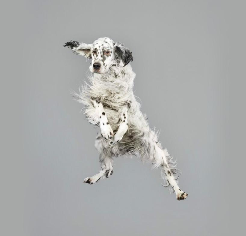 Фото собак разных пород. Фото № 4