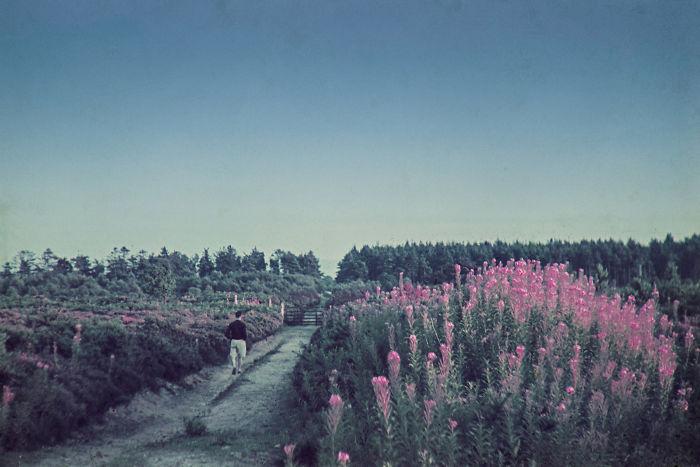 Фотографии молодожено. Вторая мировая война. Фото № 7