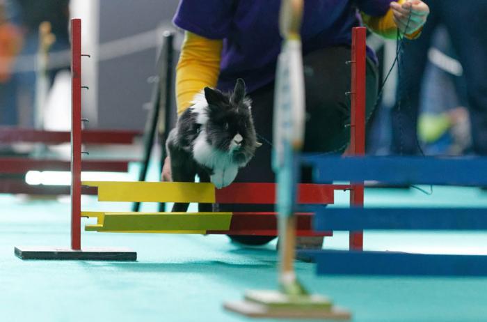 Выставка и кроличьи бега в Штутгарте