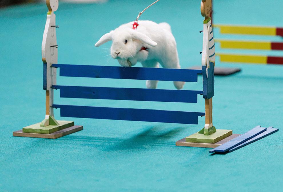 Кроличьи бега. Фото_05