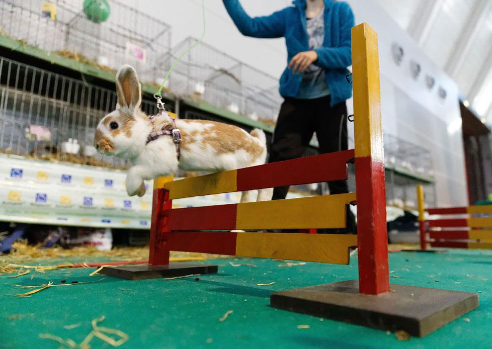 Кроличьи бега. Фото_06