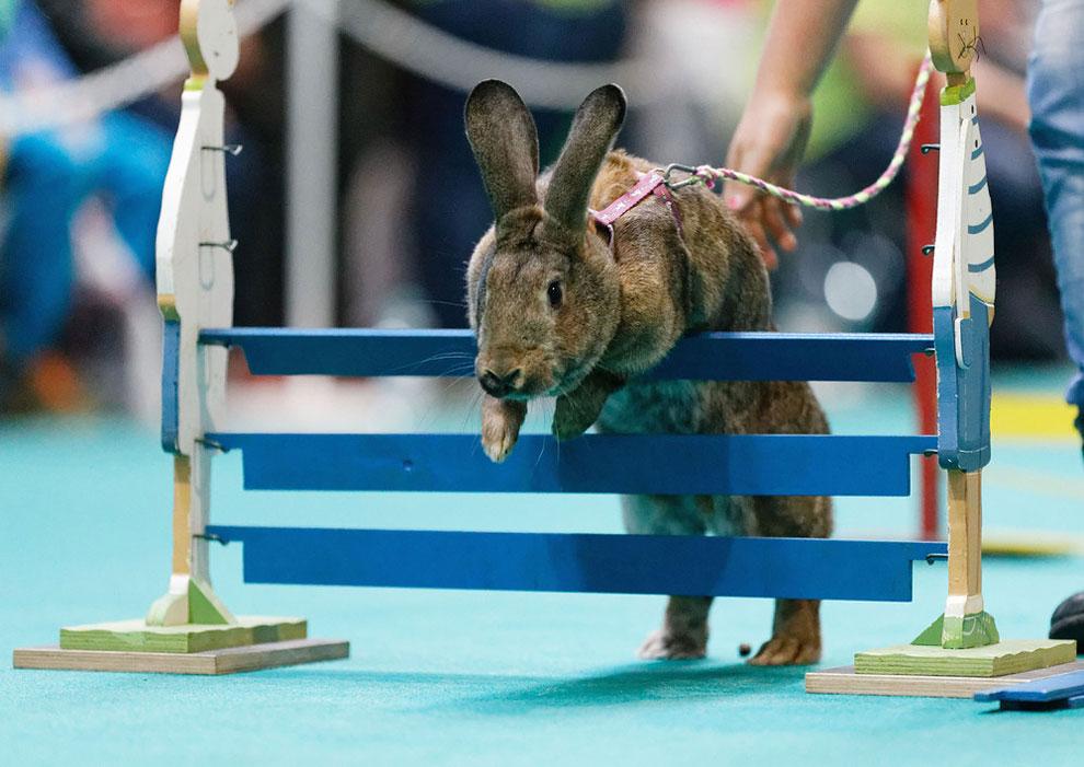 Кроличьи бега. Фото_07