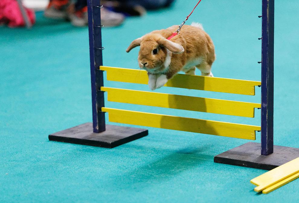 Кроличьи бега. Фото_09