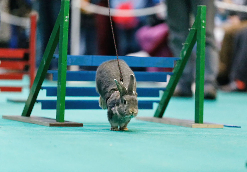 Кроличьи бега. Фото_10
