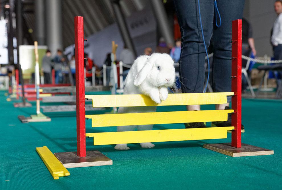 Кроличьи бега. Фото_11