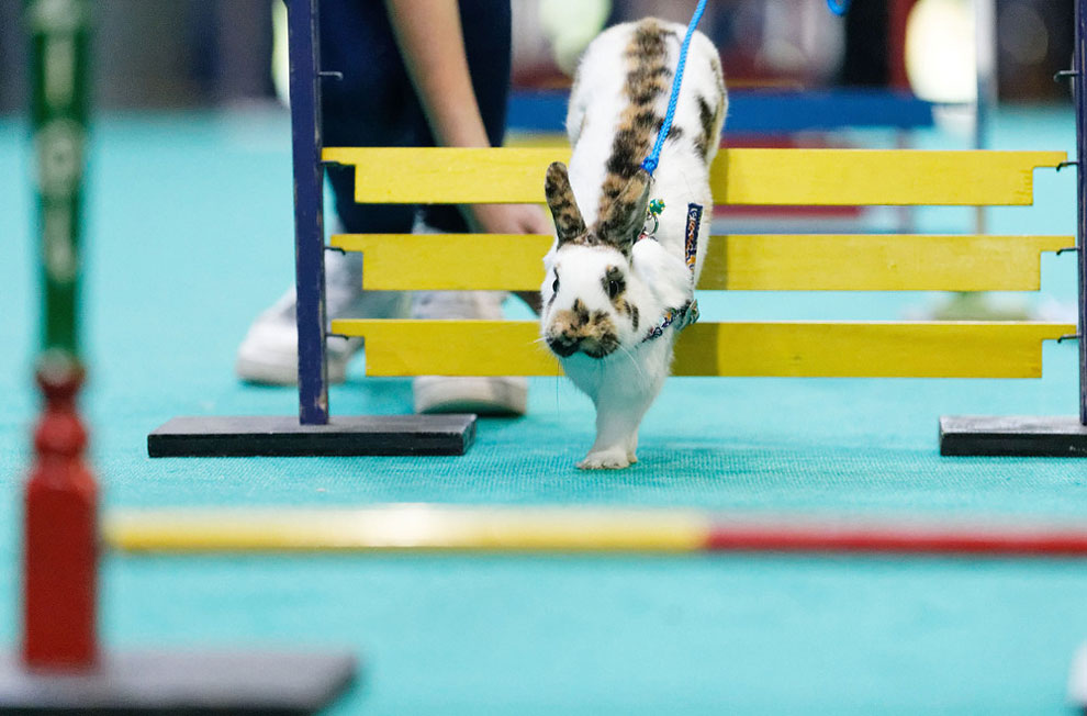Кроличьи бега. Фото_15