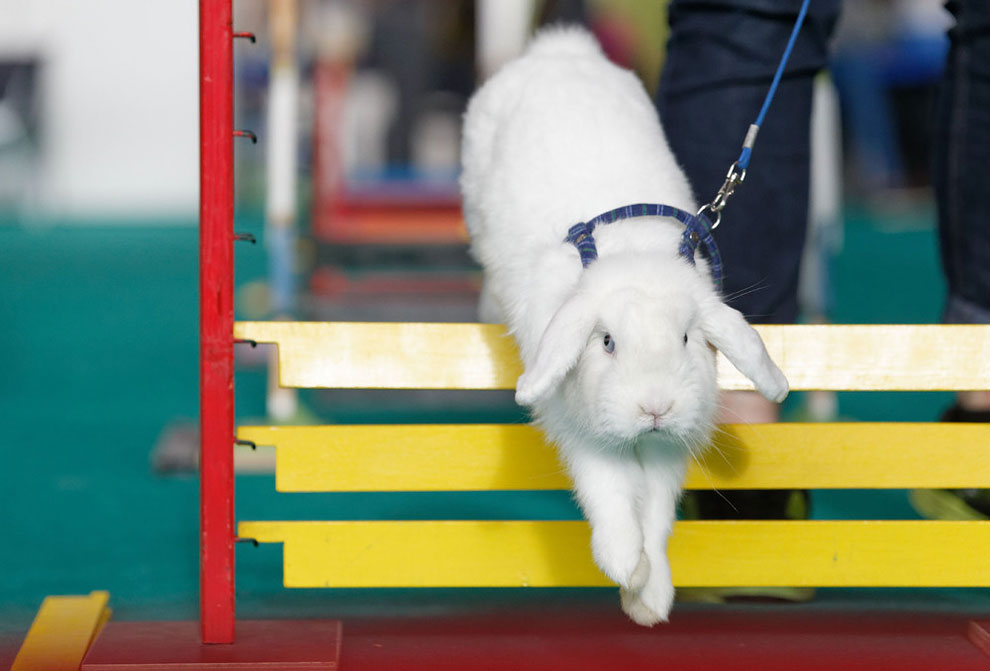 Кроличьи бега. Фото_17