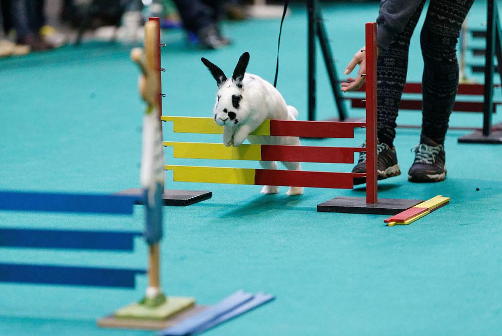 Кроличьи бега. Фото_18