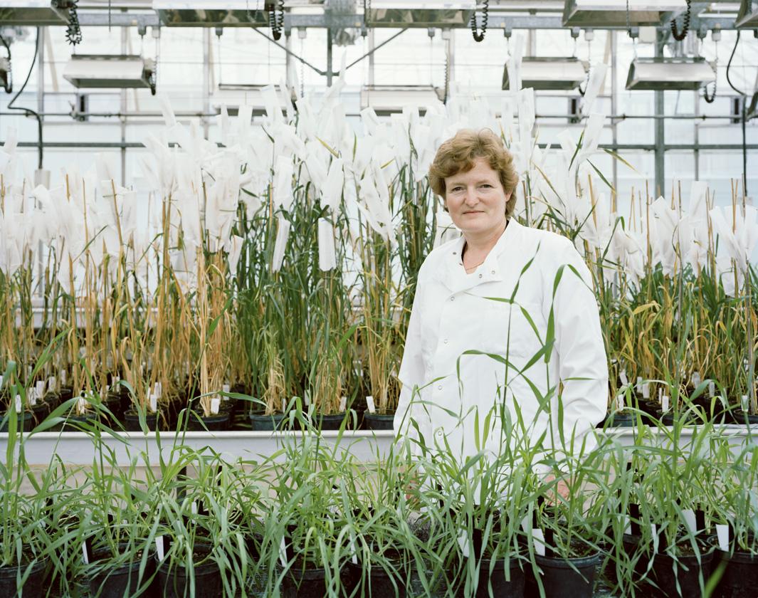 Что такое ГМО и как генетически модифицируют овощи и фрукты. Фото
