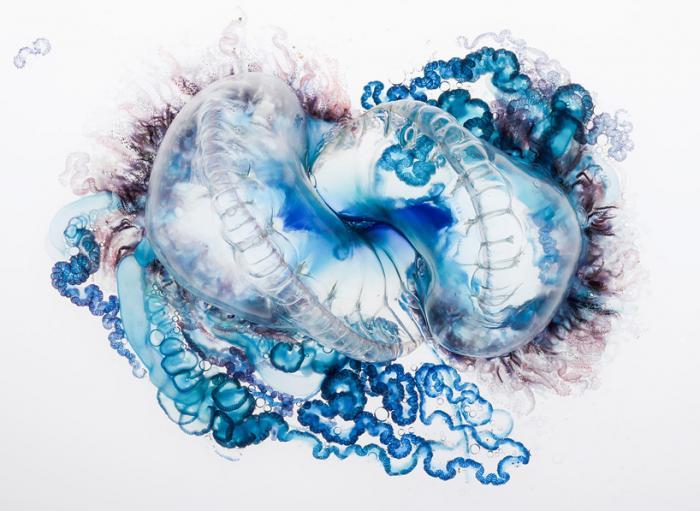 Фотографии опасной медузы как порыв творчества боевого офицера