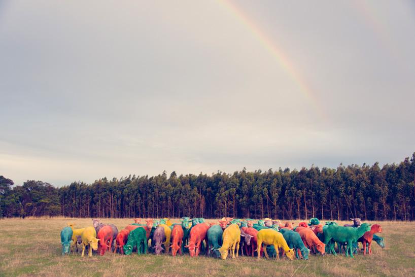 Фото овец в год овцы 2015. Фото № 1