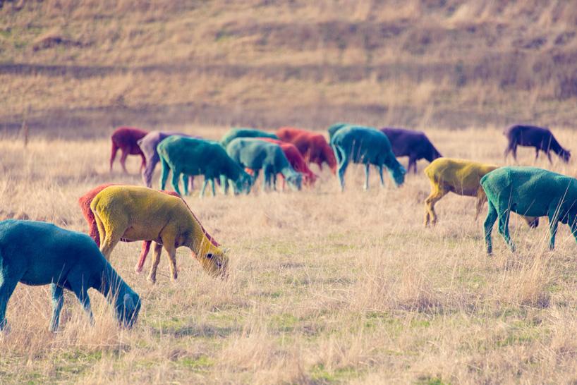 Как сделать разноцветную овцу 18