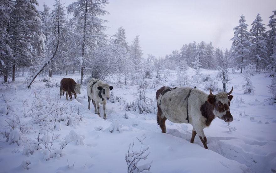 Фотопутешествие из Якутска в Оймякон. Самое холодное место на земле. Фото № 12