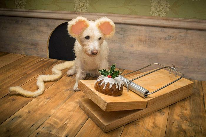 Каждое Рождество собака превращается в новое животное. Фото № 1