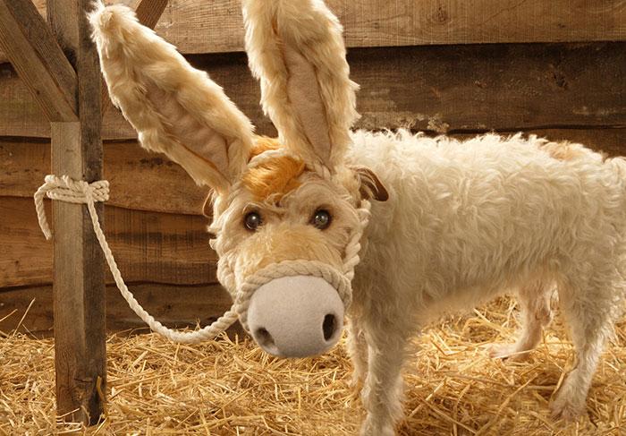 Каждое Рождество собака превращается в новое животное. Фото № 2