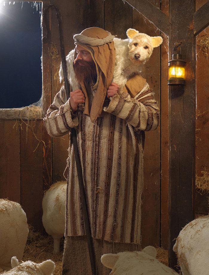 Каждое Рождество собака превращается в новое животное. Фото № 3