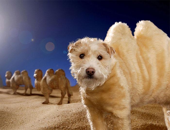 Каждое Рождество собака превращается в новое животное. Фото № 4