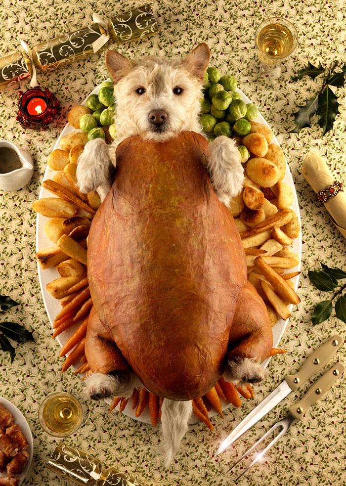 Каждое Рождество собака превращается в новое животное. Фото № 5
