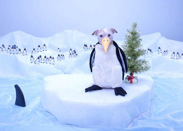 Каждое Рождество собака превращается в новое животное. Фото № 6