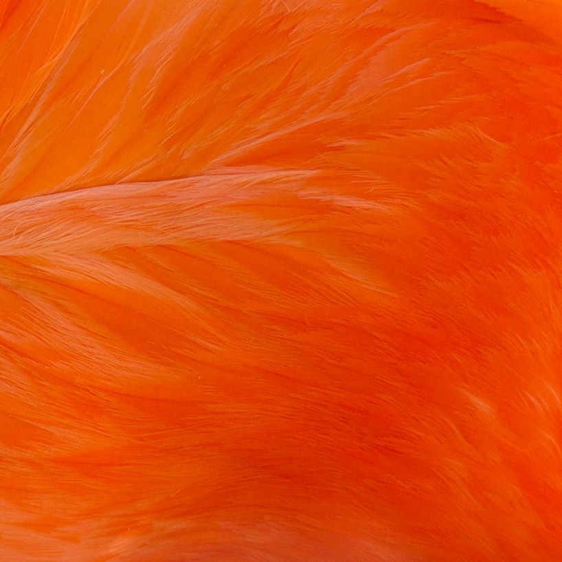 Кожа животных. Фото № 17