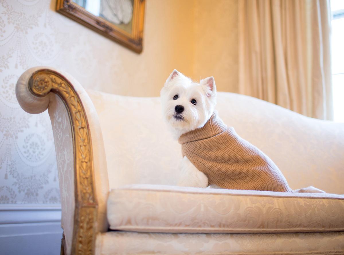 Одежда для собак. Премиальный бренд. Фото