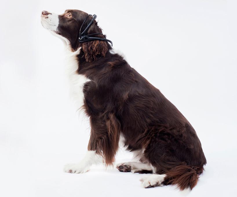 Переводчик с собачьего. Фото