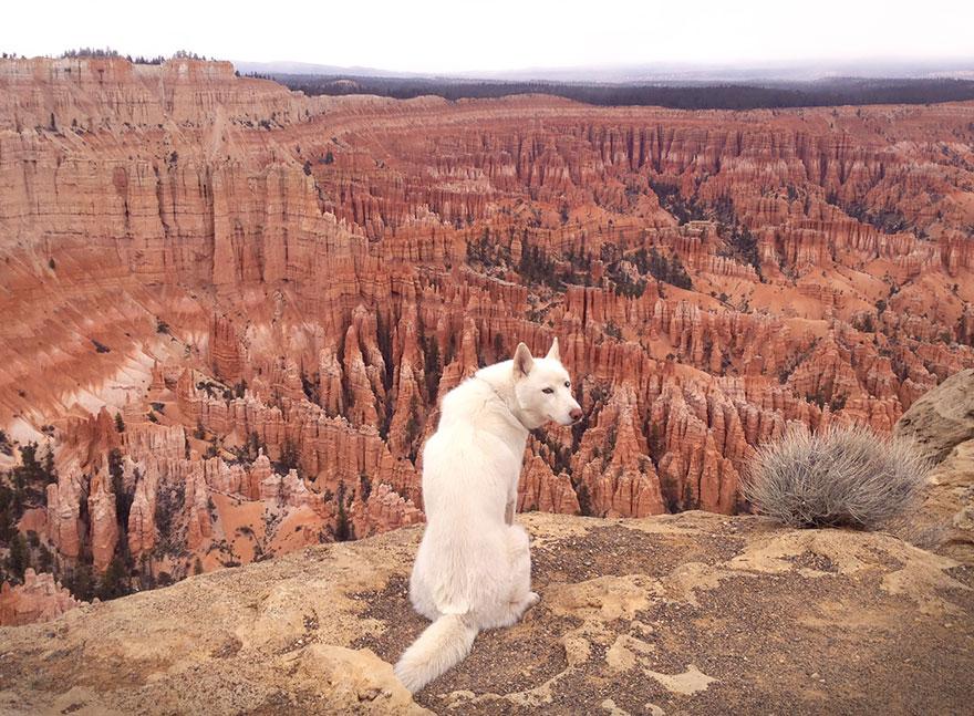 Путешествие человека и его собаки в дикую природу. Фотоотчет. Фото № 1
