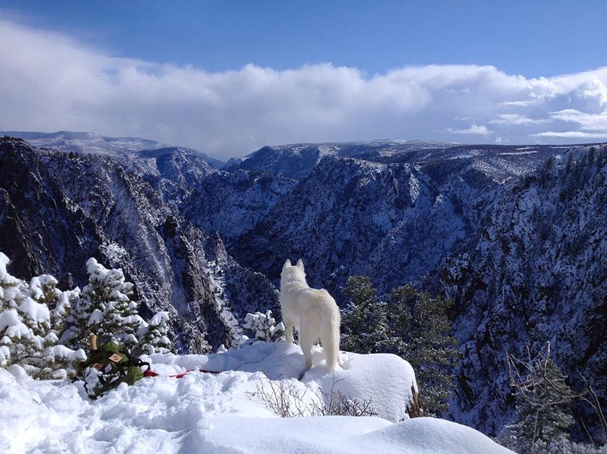 Путешествие человека и его собаки в дикую природу. Фотоотчет. Фото № 10