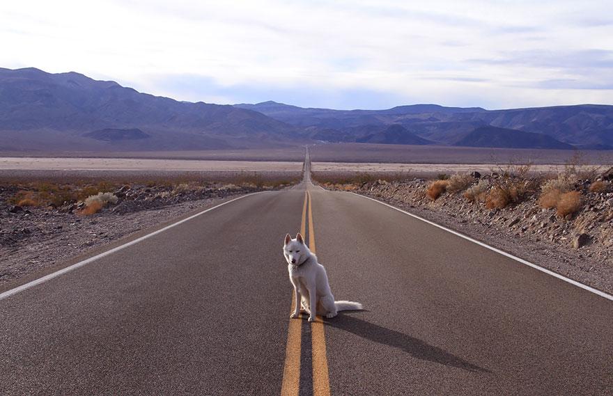 Путешествие человека и его собаки в дикую природу. Фотоотчет. Фото № 11