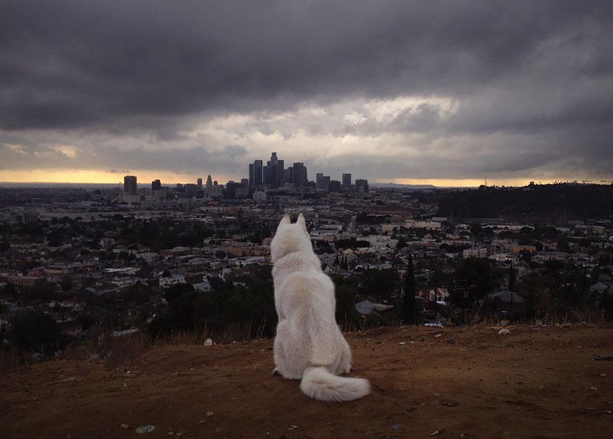 Путешествие человека и его собаки в дикую природу. Фотоотчет. Фото № 12