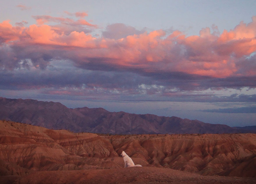 Путешествие человека и его собаки в дикую природу. Фотоотчет. Фото № 13