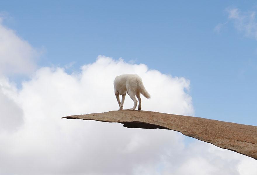 Путешествие человека и его собаки в дикую природу. Фотоотчет. Фото № 16