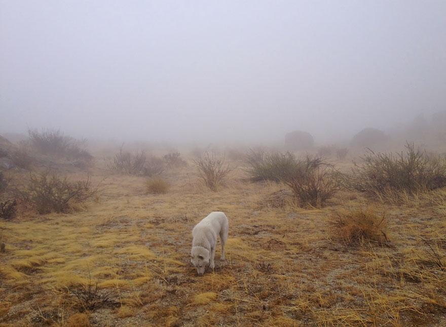 Путешествие человека и его собаки в дикую природу. Фотоотчет. Фото № 17
