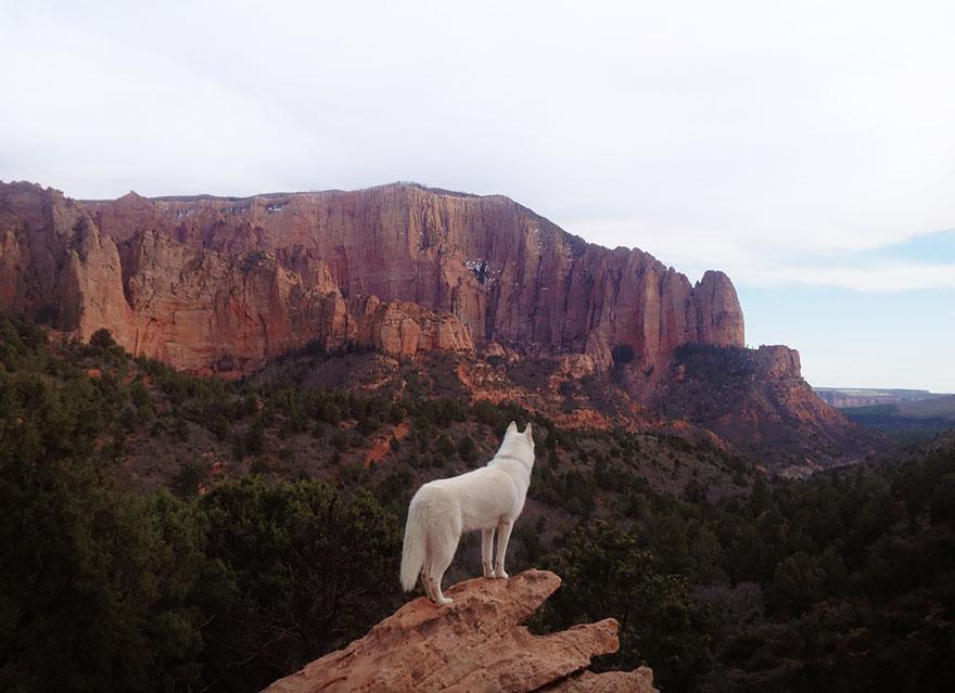 Путешествие человека и его собаки в дикую природу. Фотоотчет. Фото № 18