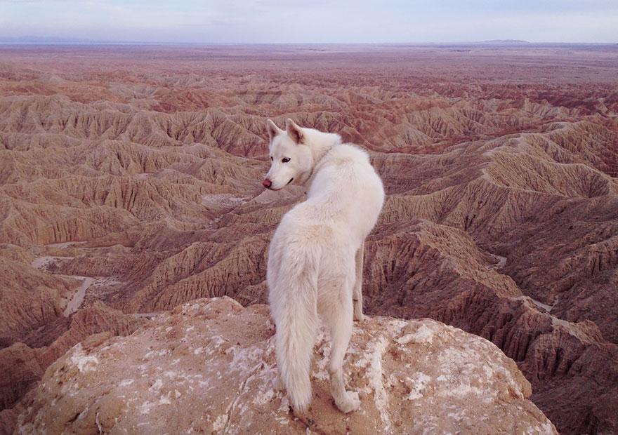 Путешествие человека и его собаки в дикую природу. Фотоотчет. Фото № 19
