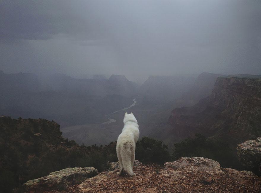 Путешествие человека и его собаки в дикую природу. Фотоотчет. Фото № 20