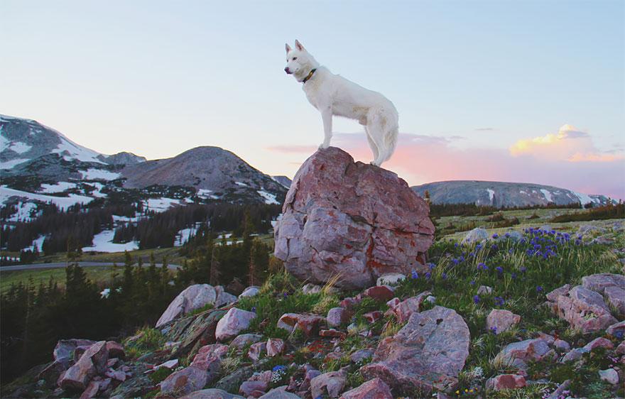 Путешествие человека и его собаки в дикую природу. Фотоотчет. Фото № 21