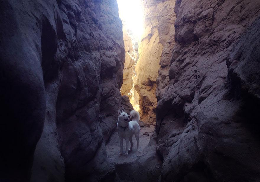 Путешествие человека и его собаки в дикую природу. Фотоотчет. Фото № 22