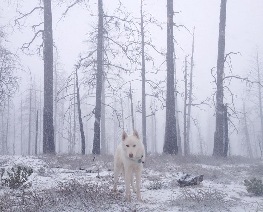 Путешествие человека и его собаки в дикую природу. Фотоотчет. Фото № 3