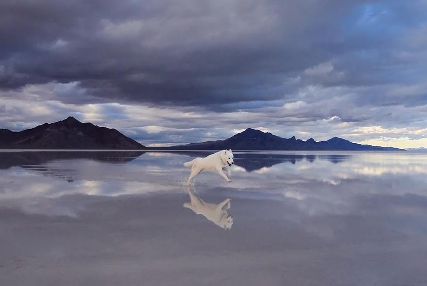 Путешествие человека и его собаки в дикую природу. Фотоотчет. Фото № 4