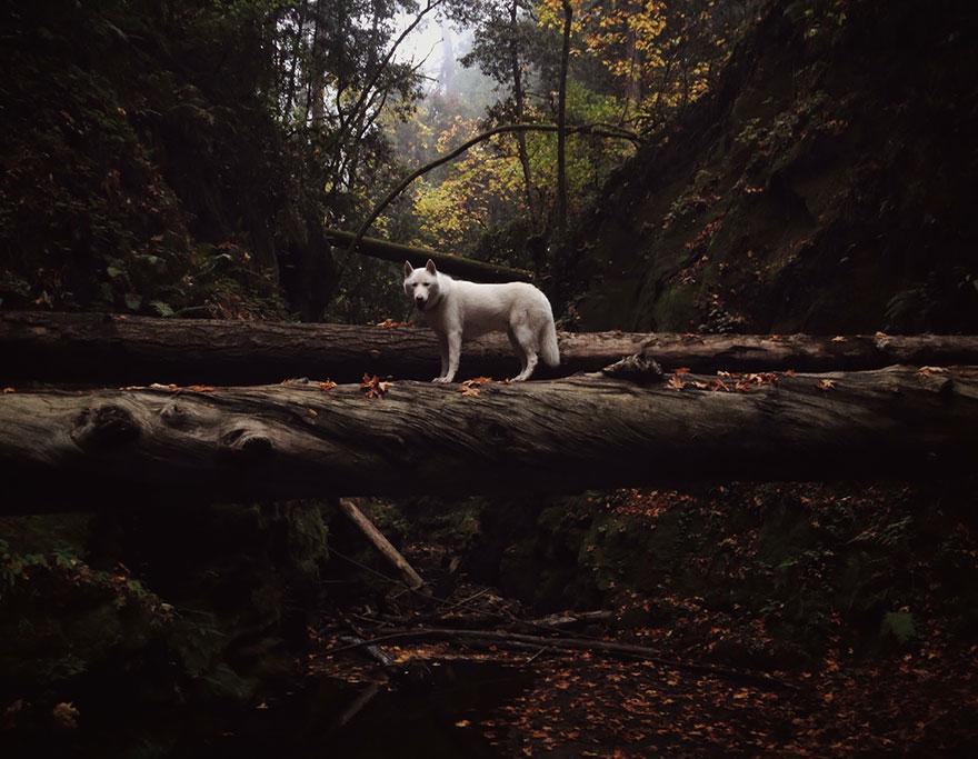 Путешествие человека и его собаки в дикую природу. Фотоотчет. Фото № 5