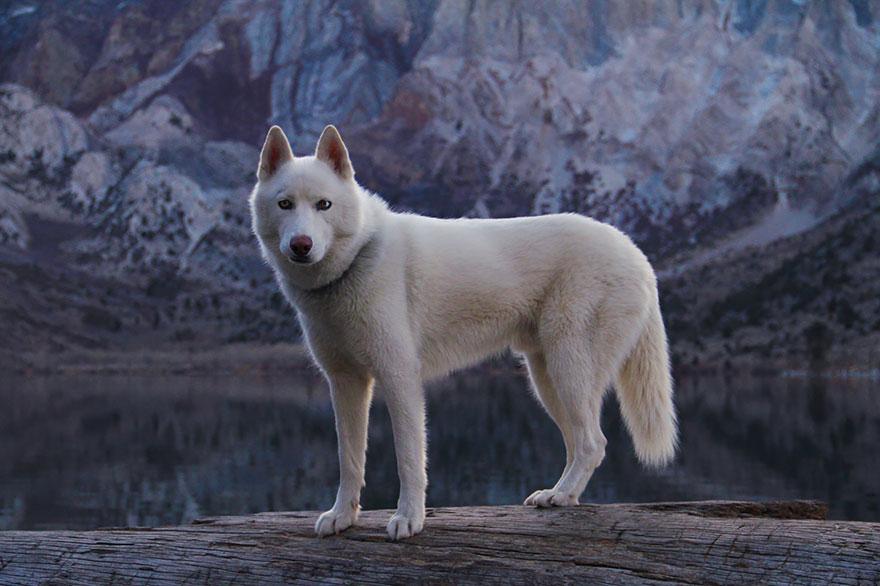Путешествие человека и его собаки в дикую природу. Фотоотчет. Фото № 6