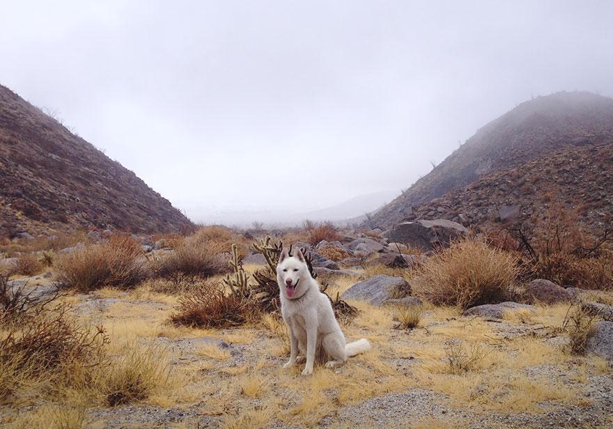 Путешествие человека и его собаки в дикую природу. Фотоотчет. Фото № 7