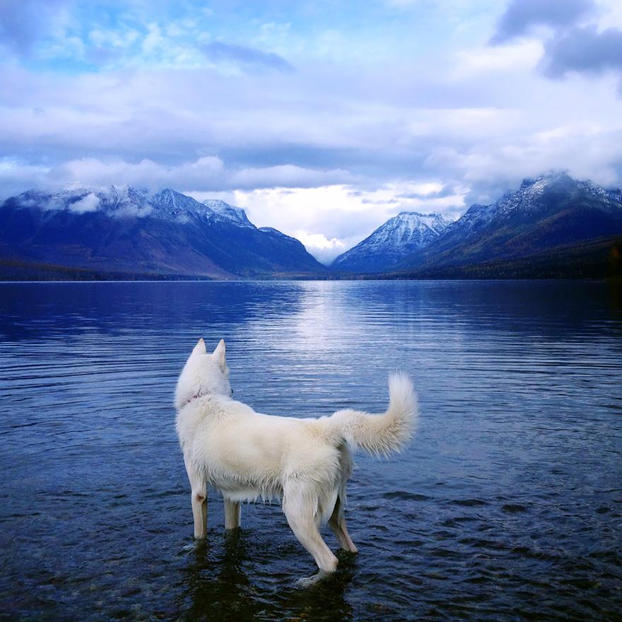 Путешествие человека и его собаки в дикую природу. Фотоотчет. Фото № 8