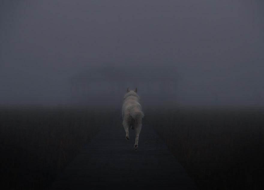 Путешествие человека и его собаки в дикую природу. Фотоотчет. Фото № 9