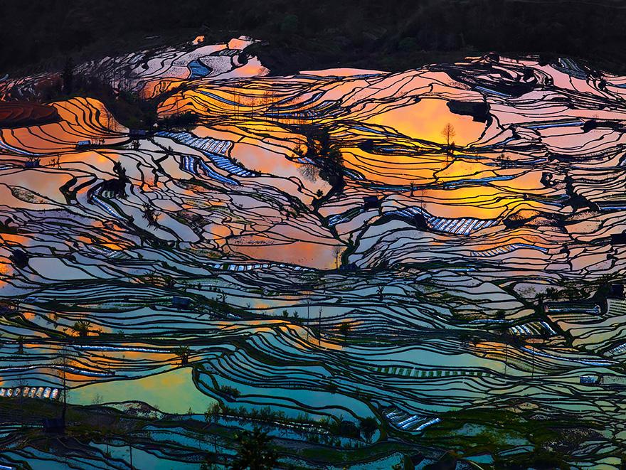 Рисовое поле. Фото № 1