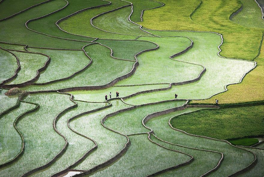 Рисовое поле. Фото № 11