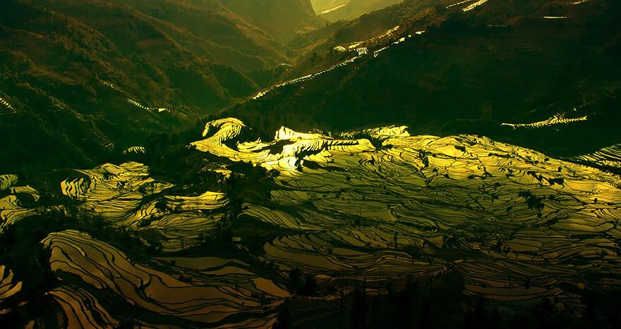 Рисовое поле. Фото № 12